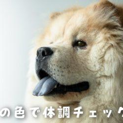 犬の体調の変化は舌の色でわかるの?!
