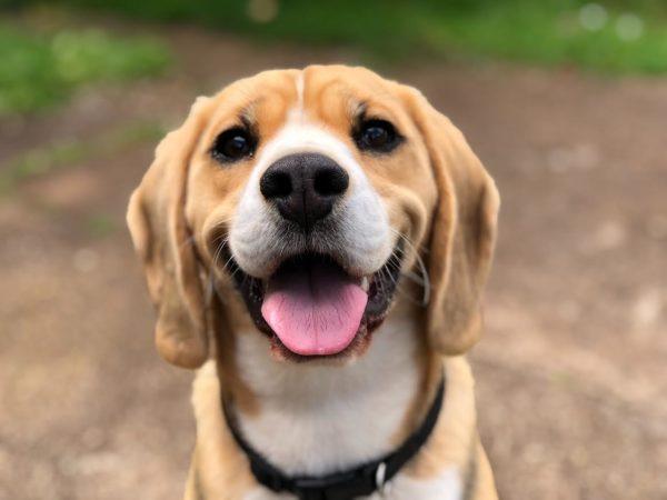 犬の舌の色で体調チェック!