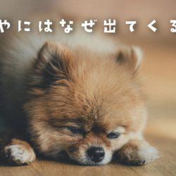 犬の目やには何が原因で出てくるの?病気の色は?