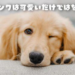 犬のウインクは何かの病気?可愛いだけではない?