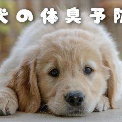 気になる犬の体臭。改善方法はあるの?