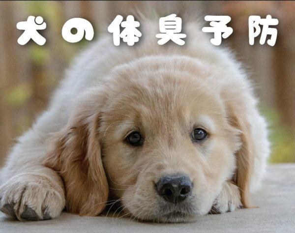 犬の体臭予防