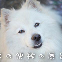 犬の便秘の原因は何?!