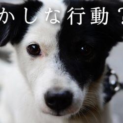 愛犬の行動がいつもよりおかしい?!