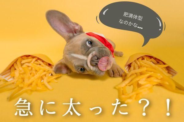 犬が急に太った?!