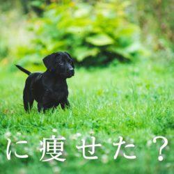 愛犬が急に痩せた?!何が原因なの??