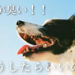 愛犬のお口は臭くない?!口臭大丈夫?