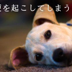 犬が血便をしている?!考えられる病気は?