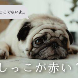犬のおしっこが赤い?!血尿で考えられる病気