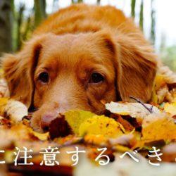 犬が秋に注意するべきことって何?
