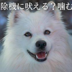愛犬が掃除機を怖がる?!なにが嫌なの?